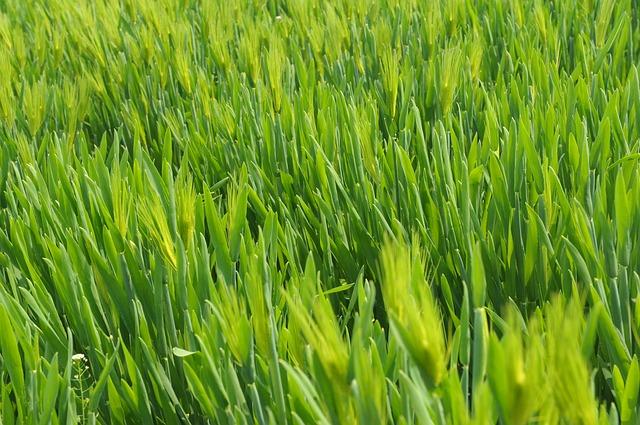 איך נוציא את המיטב מהדשא הסינטטי?