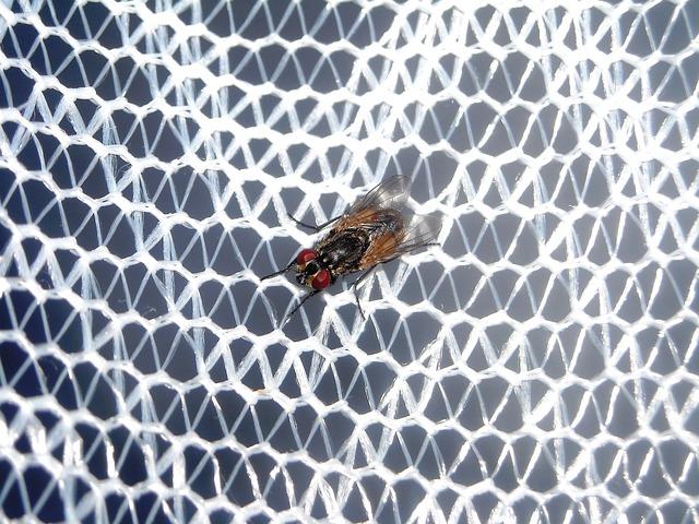 רשתות נגד זבובים ויתושים