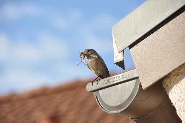 כמה עולה תיקון מרזב בבניין ובבית פרטי?